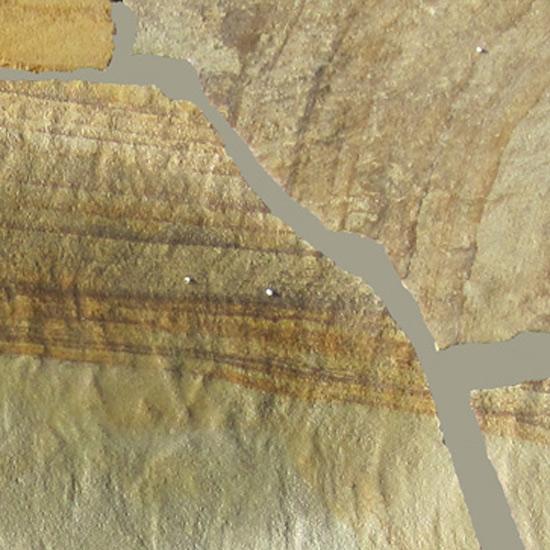 Fossil-Rustic-Flagstones